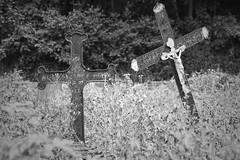 ☼ ☼ ☼ (TanieBlue) Tags: tanieblue 5dii canon canonphotography photos canonphoto photographerbelgium photographebelgique photography photo sigma photographie canonbelgique instagram 500px flickr photographesliegeois photographesfrancophones blackandwhite monochrome noiretblanc cimetiere cemetery