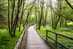 Ireland - Glendalough (Marcial Bernabeu) Tags: marcial bernabeu bernabéu irlanda ireland glendalough valley valle nature naturaleza environment country countryside sendero path footpath trail