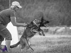 P7152336 (Songdog Studios) Tags: green dog neumond womensretreat 2017 k9 schutzhund ipo