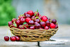 Gifts of summer (svklimkin) Tags: cherry red basket harvest berries summer