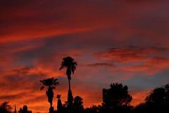 Sunset July 26 2017 #53 (Az Skies Photography) Tags: sun set sunset dusk twilight nightfall cloud clouds sky skyline skyscape skycandy skyfire red orange yellow gold golden salmon black canon eos 80d canoneos80d eos80d rio rico arizona az riorico rioricoaz arizonasky arizonaskyline arizonaskyscape arizonaskycandy arizonaskyfire july 26 2017 july262017 72617 7262017