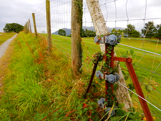 The rusted robot that watches