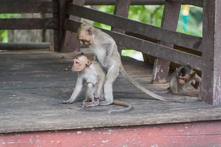phetchaburi - thailande 22