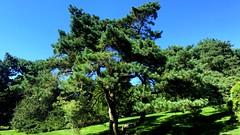 New York Botanical Garden XXX (joeclin) Tags: northamerica america unitedstates usa newyork ny belmont bronx newyorkbotanicalgarden nybg appleiphone7 iphone iphoneography tree outdoor color amateur 2010s