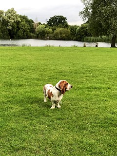 Grass Dog Domestic Animals Green Color Tree Pets Growth Field Animal Themes Nature One Animal Mammal Day Outdoors No People Landscape Sky Basset Hound at Clayton Hill, Nazeing