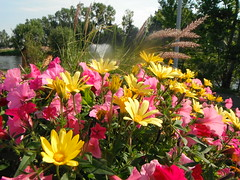 Summer Gardening ... (Mr. Happy Face - Peace :)) Tags: yyc albertabound summer floral canada cans2s art2017 fountain pink yellow scenery flower