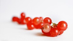 Red (Zsofia Nagy) Tags: ourdailychallenge colors color closeup redcurrant whitebackground tabletop macro fruit fruits dof depthoffield 52in2017challenge