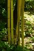 _DSC5157 (wdeck) Tags: garten garden botanicalgarden landhausettenbühl bamboo bambus sonyalphaslt77 sony 18