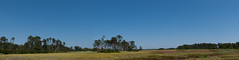 07082017-526-Pano-1_edited (bjf41) Tags: chincoteague horses wild herd colts