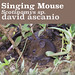 Singing Mice, Scotinomys sp.