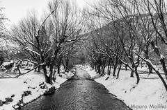 _DSC5346 (m4ur0nqn) Tags: d5100 landscape snow patagonia argentina sma nieve