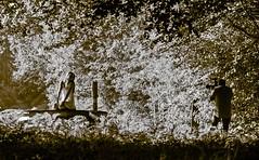 der Fotograf und sein Model (gabrieleskwar) Tags: outdoor schatten wald sonne fotograf model schwarzweiss bäume blätter licht