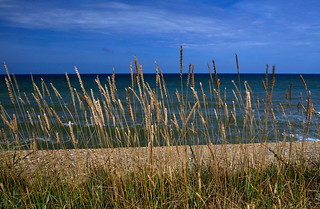 Grass and sea