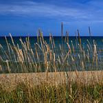 Grass and sea thumbnail