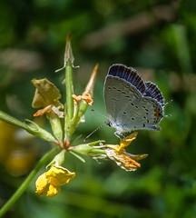 What's Next? (Portraying Life, LLC) Tags: dbg6 da3004 hd14tc k1 michigan pentax ricoh unitedstates butterfly closecrop handheld nativelighting