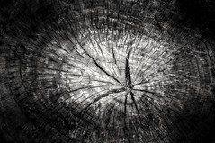 Bole abstract (alzarif-Abo Ali) Tags: bole abstract blackandwhite stilllifephotography nikond300s 85mm flickr awsome stunning nikon nikonphotography aroundtheworld aymanzarif