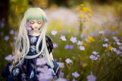 fairy meadow (koroa) Tags: bjd leekeworld noella doll feeriedollatelier feeriedoll