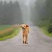 country roads (tom landretti) Tags: