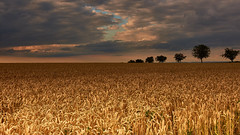 Before the storm (flowerikka) Tags: clouds cornfield country field germany grainfield harvest heaven horizon landscape rural sky storm trees