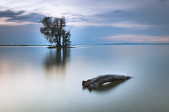 Just before the storm... (Marcin Dallig) Tags: switzerland swiss bodensee austria tree water waterfront outdoor wood nd landscape sunset sommer blue