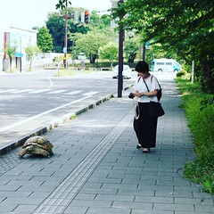 Turtle walking ^^ (ximski) Tags: カメ turtle 弘前 hirosaki 青森 aomori