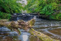 upper falls of Lynn Glen (MC Snapper78) Tags: scotland nikond3300 dalry ayrshire lynnglen waterfall landscape marilynconnor