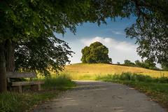 romantic path (hjuengst) Tags: vogelberg ebersberg limetree twintree bench path linden bavaria riedhof