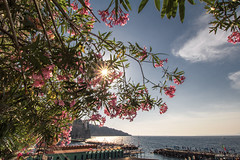 Marina Piccola - Sorrento (Italy) (Andrea Moscato) Tags: andreamoscato italia view vista vivid sun sole sunshine star landscape paesaggio fiori flowers tree albero acqua sea seascape mare water reflection riflesso cielo sky nuvole clouds blue white green pink shadow ombra light luce leaves
