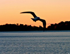 Fly Jonathan fly... (Kens images) Tags: flight nature birds freedom colour canon art seclusion rivers