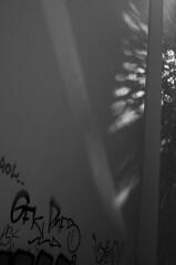 Unkraut // Weed (apfelbla) Tags: wall wand light licht shadow schatten schwarzweis schwarzundweis schwarzundweiss sw blackandwhite bw blacknwhite blackwhite minimal minimalism minimalismus minimalistic minimalistisch lines linien line linie graffiti graffity