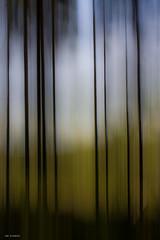 dark trees (sami kuosmanen) Tags: nature north light luonto landscape long exposure europe northern photography puu pitkä valotus valo värikäs taivas tree tumma tuulos trees travel liike intentionalcameramovement icm finland forest metsä maisema colorful creative