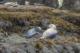 Oregon Coast Sea Life