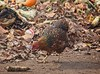 Composter (Goggla) Tags: nyc new york governors island urban farm chicken bird compost pile governorsisland