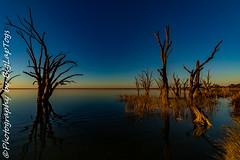 IMG_5408 (biglaptogs) Tags: barmera lakebonney riverland sa states