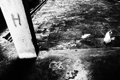 R0022853 (kenny_nhl) Tags: ricoh road grd grdiv grd4 provoke street streetphotography snap shot shadow scene surreal streephotography visual 28mm monochrome malaysia photo photography explored explore black blackwhite bw city cat dark life blackandwhite