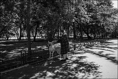DR150802_0912D (dmitryzhkov) Tags: old oldwoman dog animal fence converse conversation eyecontact black blackandwhite bw monochrome white bnw blacknwhite bnwstreet day daylight motion movement walk walker walkers pedestrian pedestrians sidewalk sony alpha art city europe russia moscow documentary journalism street streets urban candid life streetlife citylife outdoor outdoors streetscene close scene streetshot image streetphotography candidphotography streetphoto candidphotos streetphotos moment light shadow people citizen resident inhabitant person portrait streetportrait candidportrait unposed public face faces eyes look looks man men sun