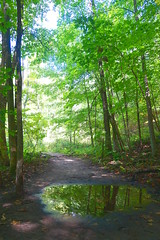 Forest in a Puddle (Heather's Reflections Photography) Tags: forest trees puddle water reflection woods green jungle foliage flora tree trunk nature wildlife preserve statepark park trail road path walk walking outdoors outside vacation hike hiking hills wisconsin unitedstates light color blue sky leaves tunnel canopy over overhead sunny sunlight around dirt pathway