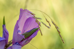 Flower's and Grass. (Omygodtom) Tags: texture bokeh macro backlit grass flower flickr tamron tamron90mm contrast digital macromondays natural nikkor nikon plant dof d7100