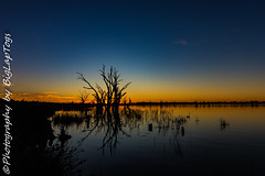 IMG_5460 (biglaptogs) Tags: barmera lakebonney riverland sa states sunsetsunrise
