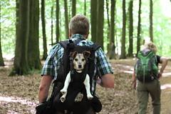 Wanderer mit Hund (julia_HalleFotoFan) Tags: rügen inselrügen jasmund nationalparkjasmund königsstuhl viktoriasicht buchenhochwald herthasee halbinseljasmund