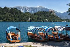 Bled boats (Mikkel Bendix) Tags: boat sailing bled slovenia water lake sea nature castle mountains mountain landscape