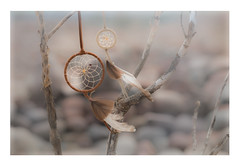 Driftwood Dreams (Photography by Julia Martin) Tags: photographybyjuliamartin dreamcatcher driftwooddreams driftwood pebbles creativeedit seabreeze
