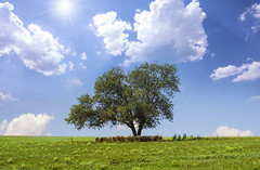 Hide From The Heat (ИвайлоВеликов) Tags: field sky landscape soil nature sun tree summer grass horizon countryside pasture agriculture rural farm outdoors heat idyllic hayfield no person fair weather ngc