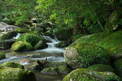 Yoggo Valley, Yakushima, Japan (SamKent22) Tags: yakushima island yoggo valley waterfall falls moss covered rocks lush green idyllic nature japan japanese landscape