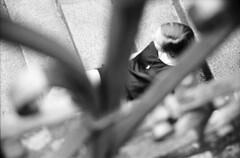 Alissa (Jan Meifert) Tags: ilford pan 400 analogue analog film 35mm bw sw portraiture portrait porträt hamburg altona stairs treppe bokeh jan meifert