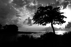 Let the light fall (Series) (The Salty Mist Photography) Tags: puertorico paradise caribbean clouds sunsets seascapes skyscapes landscapes blackandwhite beach trees silhouette sun nature