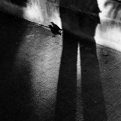 On a décidés de faire une promenade ensemble... (woltarise) Tags: ombres oiseau matin 6h30am montréal angus site