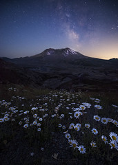From the Ashes (santosh_shanmuga) Tags: mount saint helens mt st mountsthelens sthelens volcano stratovolcano mountain cascades landscape vista beautiful wild nature outdoor outdoors star starry sky night nightsky milky way milkyway galaxy wildflowers alpine nikon d810 1424mm washington skamania