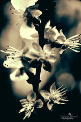 untitled_pregamma_1_pattanaik00_mul_13.61_autolumnn (Enorasis Project photography) Tags: blossom palaiofaliro παλαιόφάληρο nikond5100 sigmalenses sigma1770 spring darktable gimp linux debian hdr