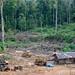 Logging area
